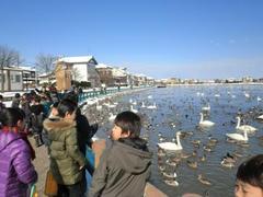 2.18 3年生瓢湖見学.JPG